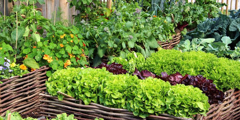 Companion Planting may help save the Earth